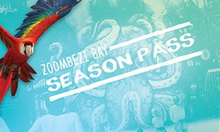 Zoombezi Bay 2015 Season Pass